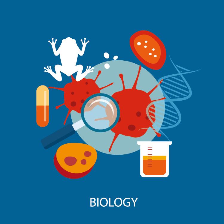 【IB DP】Final Exam直前!IB Biology(生物)の勉強法・コツを伝授!